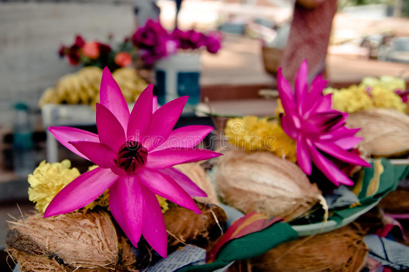 Offerings: pink lotus, yellow flowers stock image
