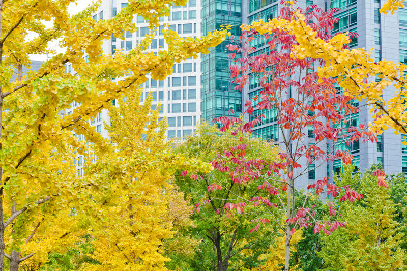 Office building of autumn royalty free stock image