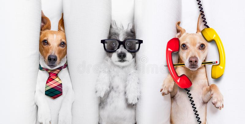 Burnout couple of dogs at work royalty free stock image