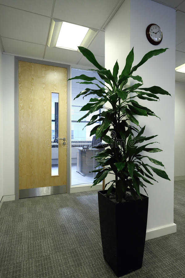 Download Office Plant stock image. Image of relaxation, office - 24665271