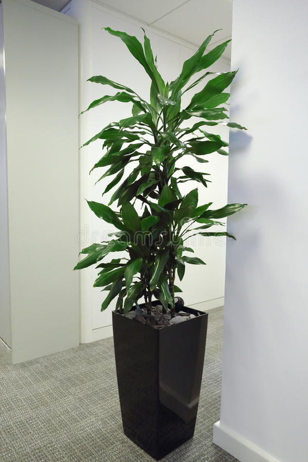 Download Office Plant stock photo. Image of plant, breathe, office - 24795634