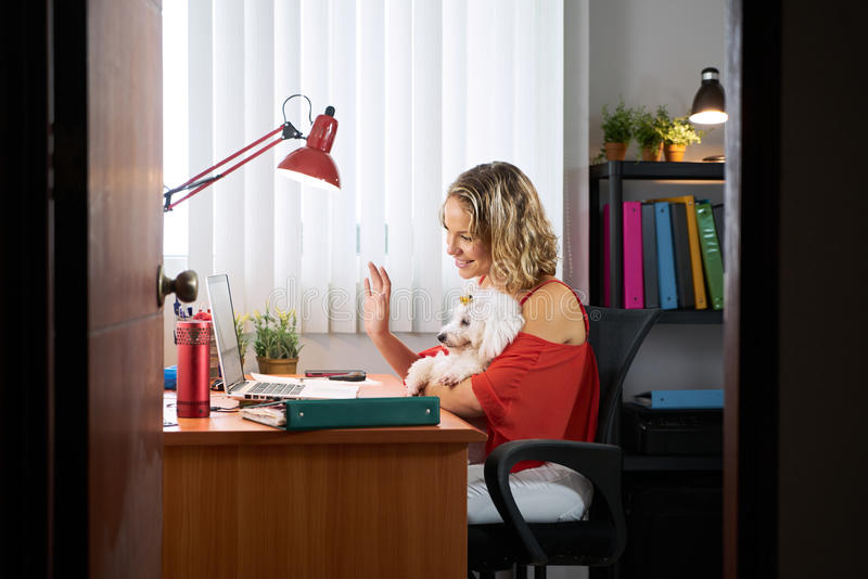 Office Woman Holding Dog During Skype Conference Call. People, pets and love for animals. Young woman sitting at office desk, doing a conference call on skype stock photos