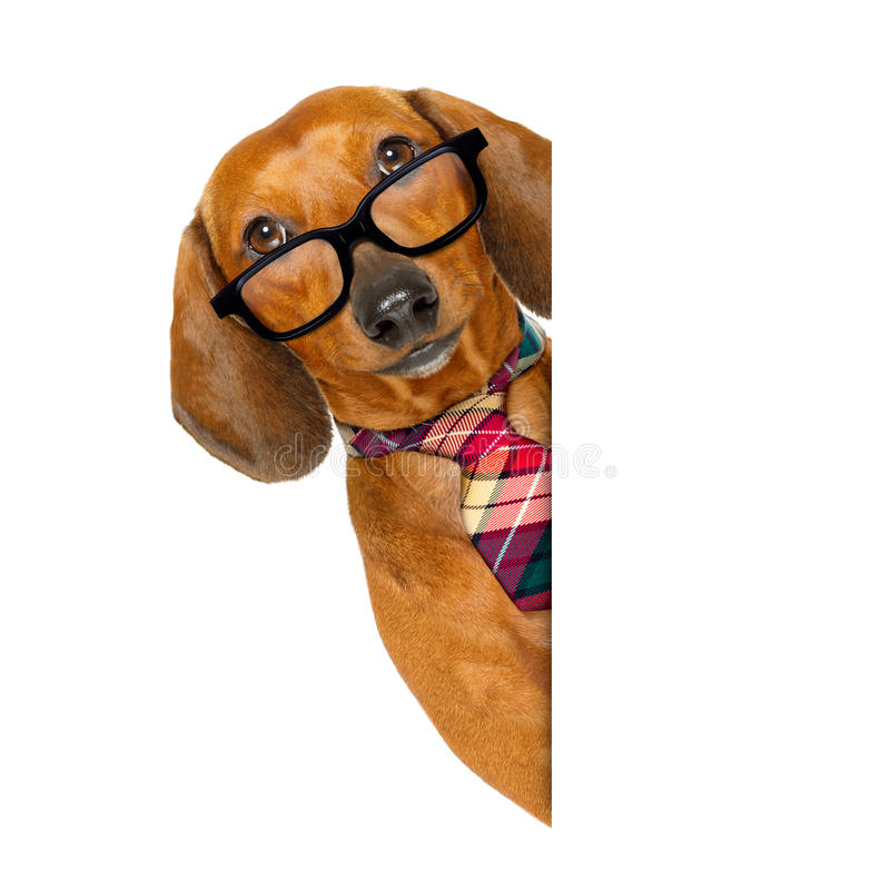Office worker boss dog royalty free stock image