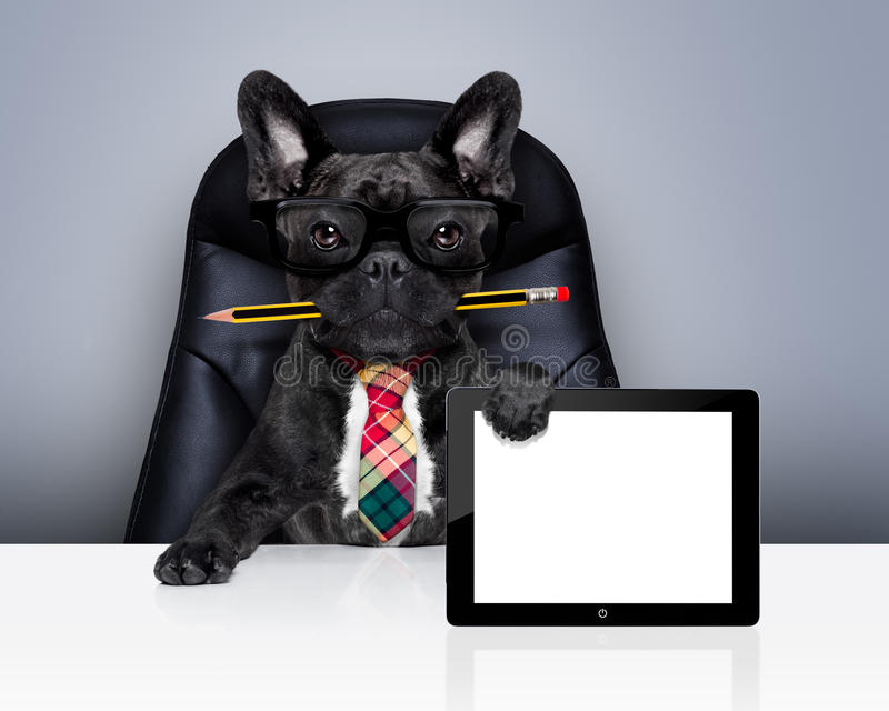 Office worker boss dog stock images