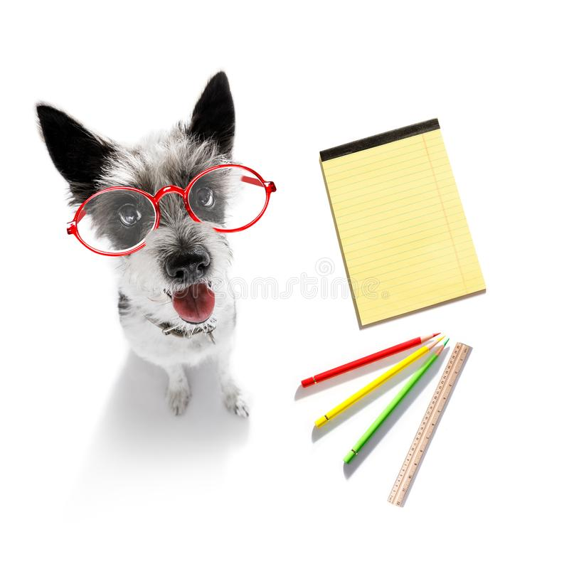 Office worker businessman dog royalty free stock image