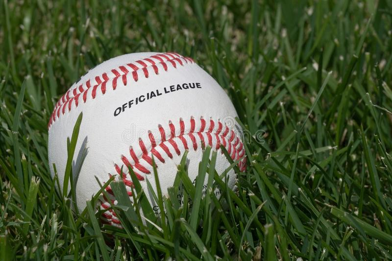 Official baseball on the grass stock photography