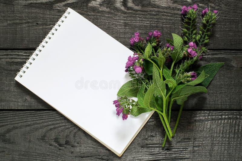 Officinale y cuaderno del Symphytum de la consuelda de la planta medicinal imagenes de archivo