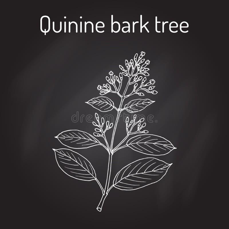 Officinalis de quinquina d'arbre d'écorce de quinine, plante médicinale illustration de vecteur