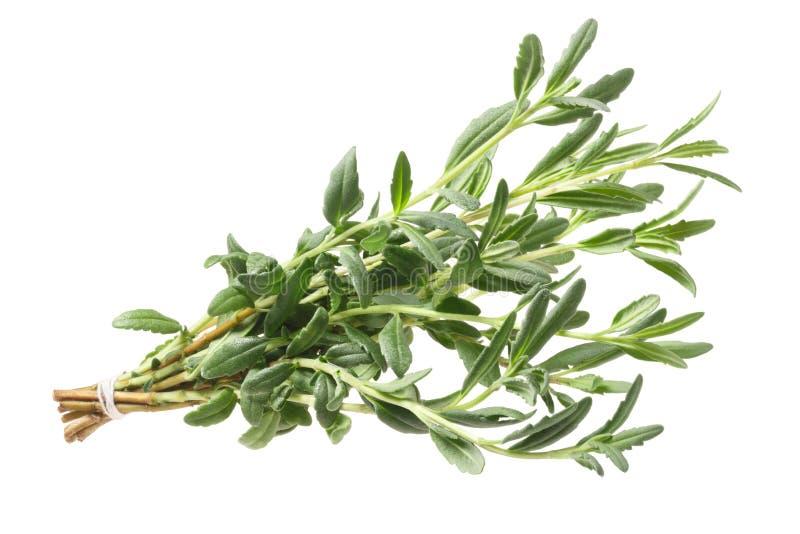 Officinalis hierba, trayectoria del Hyssopus del Hisopo foto de archivo