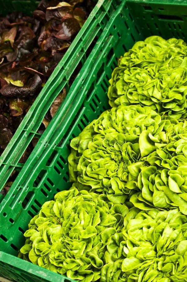 Offre de salade photographie stock