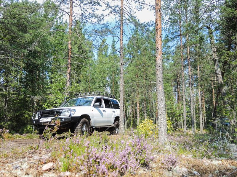 Offroad adventure on Toyota in the forests of Karelia. In summer royalty free stock images