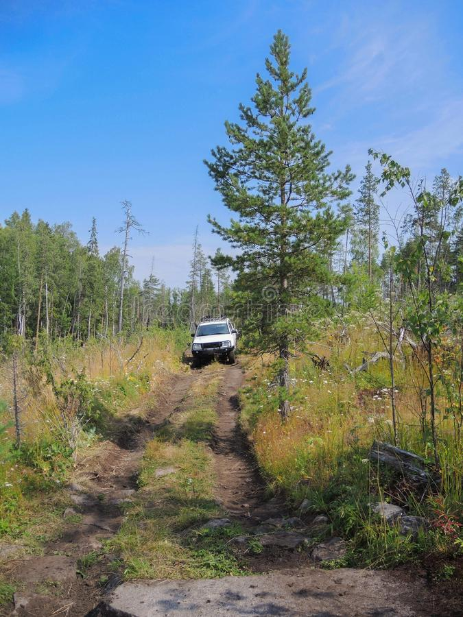 Offroad adventure on Toyota in the forests of Karelia. In summer royalty free stock photography