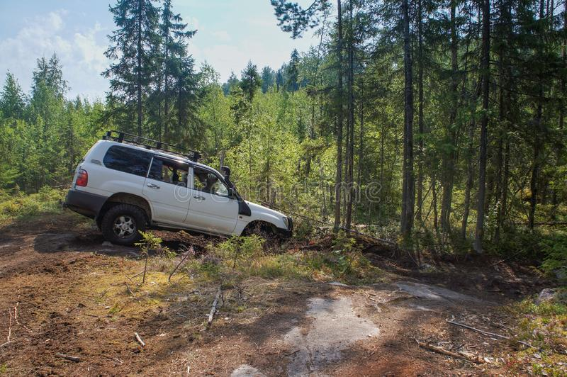 Offroad adventure on Toyota in the forests of Karelia. In summer stock images