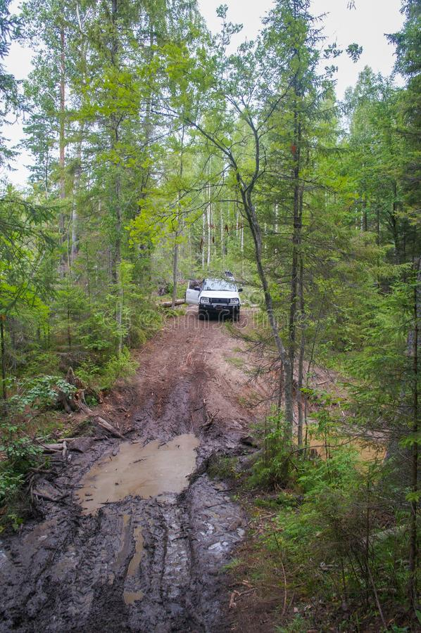 Offroad adventure on Toyota in the forests of Karelia. In summer stock photos