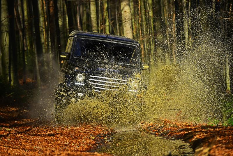 Offroad race on fall nature background. Car racing in autumn forest. Extreme, challenge and 4x4 vehicle concept. SUV or. Offroad car on path covered with leaves royalty free stock photography