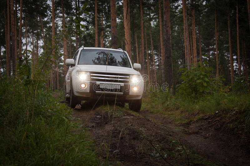 Offroad vehicle in forest. Horizontal outdoors shot of offroad car driving in coniferous wood royalty free stock photography
