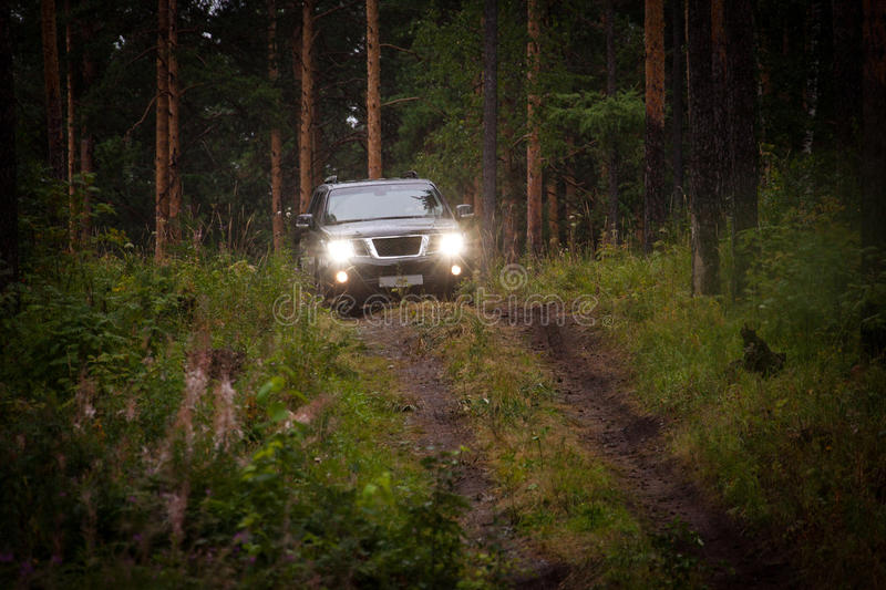 Offroad vehicle in forest. Horizontal outdoors shot of offroad car driving in coniferous wood royalty free stock photo