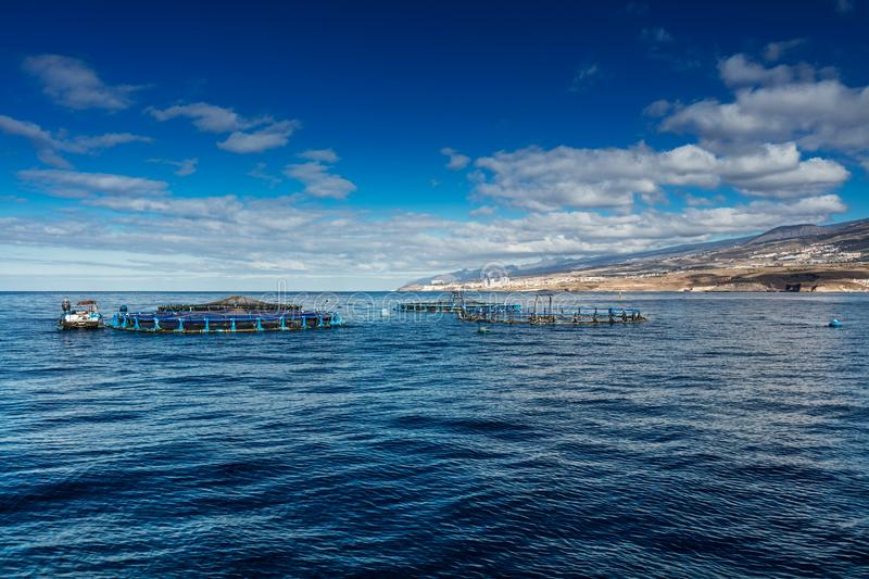 Offshore fish farms clustered around the west coast of Tenerife, Spain. Sea bass and common bream are cultured in these breeding c. Ages. This form of stock photo