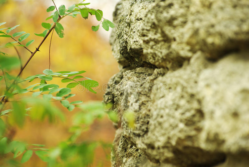 Download Offspring by the wall stock photo. Image of fall, offspring - 11501684