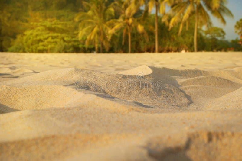 Offuschi la sabbia, palme e fondo del bokeh della spiaggia, vacanze estive e concetto tropicali di viaggio Copi lo spazio, modell immagini stock libere da diritti