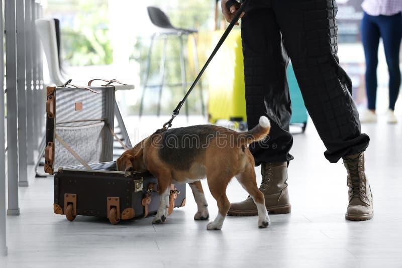 Oficial con perro buscando drogas cerca de una maleta abierta en el aeropuerto fotos de archivo
