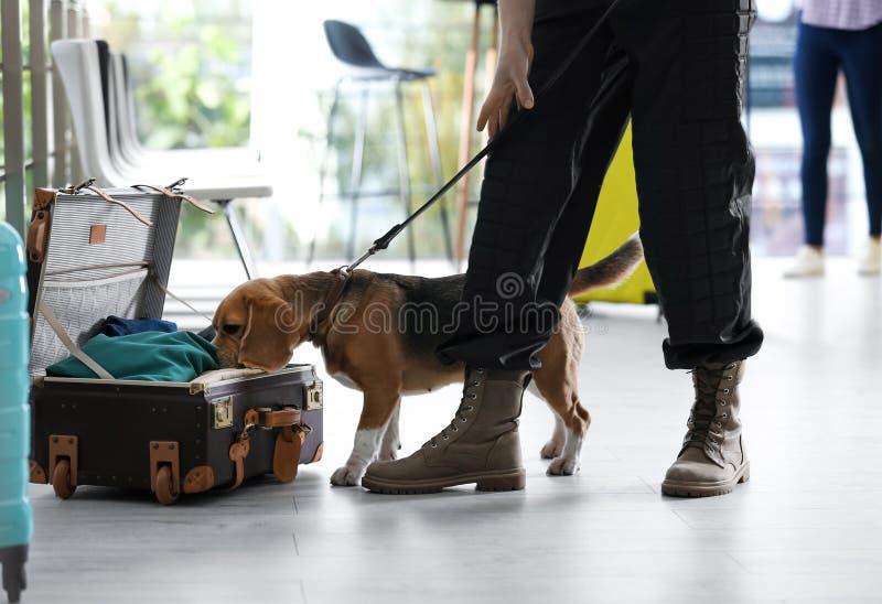 Oficial con perro buscando drogas cerca de una maleta abierta en el aeropuerto fotos de archivo libres de regalías