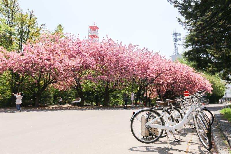Oficina gubernamental anterior de Hokkaido imagen de archivo libre de regalías
