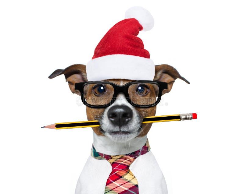 Oficinista del perro el días de fiesta de la Navidad imagen de archivo libre de regalías