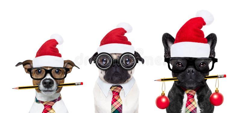 Oficinistas del perro el días de fiesta de la Navidad imagen de archivo libre de regalías