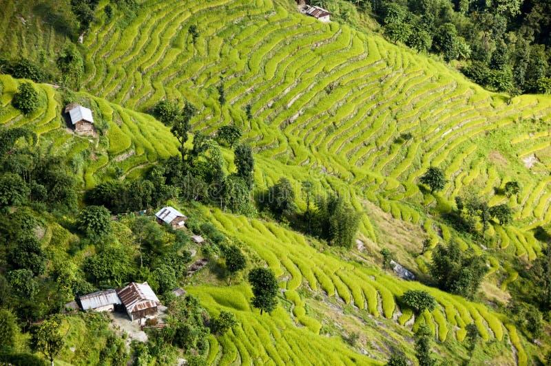 ofl powietrzny ryż tarasuje widok fotografia stock