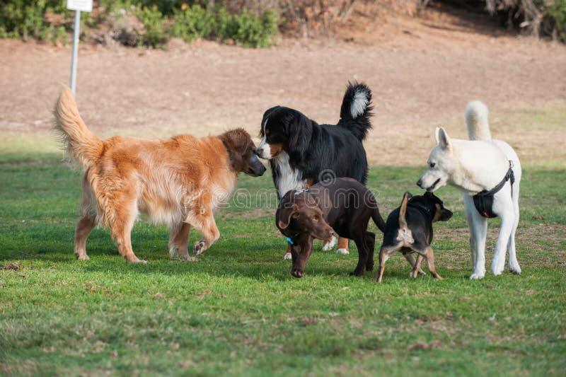 Ogólnospołeczna godzina przy psim parkiem obraz royalty free