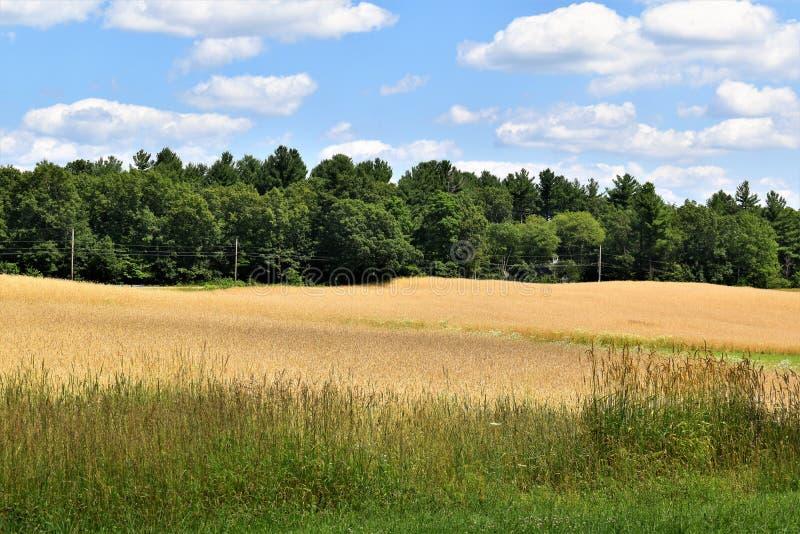 Ogólny pole w lecie, miasteczko Groton, Middlesex okręg administracyjny, Massachusetts, Stany Zjednoczone zdjęcia royalty free