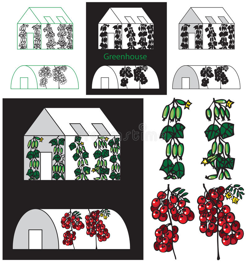 Ogórki i pomidory szklarniani ilustracja wektor