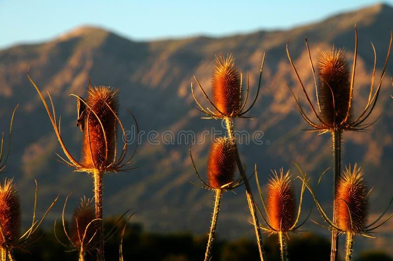 Ogden Utah Grassshopper sulle piante immagine stock libera da diritti