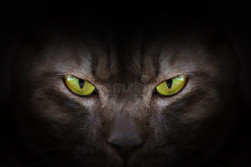 Ogen van zwarte kat in dark royalty-vrije stock afbeelding
