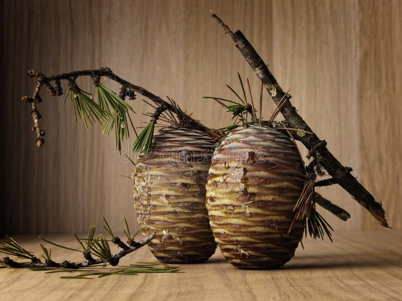 Oggetto del pino Cones immagine stock