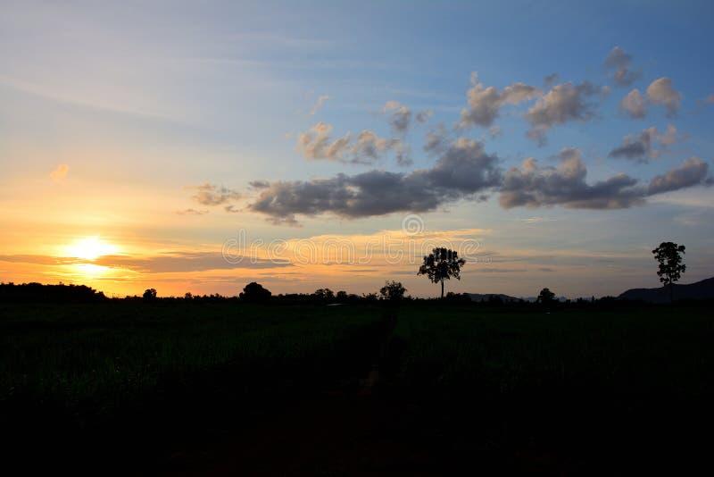 Oggetto della siluetta di paesaggio naturale tropicale fotografia stock