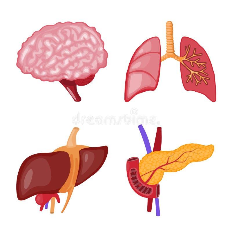 Oggetto isolato del simbolo dell'organo e di anatomia Raccolta di anatomia e dell'illustrazione di riserva medica di vettore illustrazione di stock