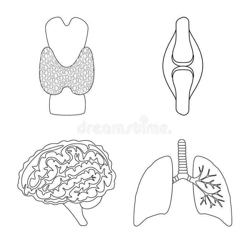 Oggetto isolato dell'icona dell'organo e di anatomia Raccolta di anatomia ed icona medica di vettore per le azione illustrazione vettoriale
