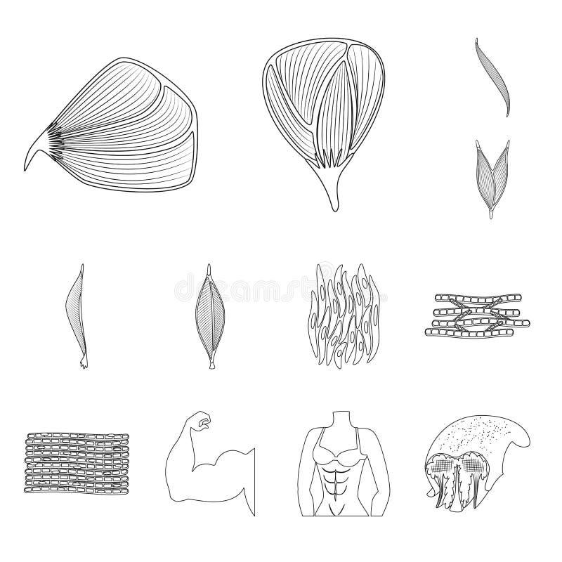 Oggetto isolato di fibra e del logo muscolare Metta dell'illustrazione di vettore delle azione del corpo e della fibra illustrazione di stock