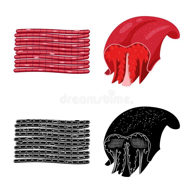Oggetto isolato di fibra e del logo muscolare Metta dell'illustrazione di vettore delle azione del corpo e della fibra illustrazione vettoriale