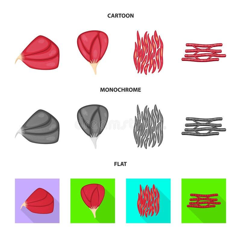 Oggetto isolato di fibra e del logo muscolare Raccolta del simbolo di riserva del corpo e della fibra per il web royalty illustrazione gratis