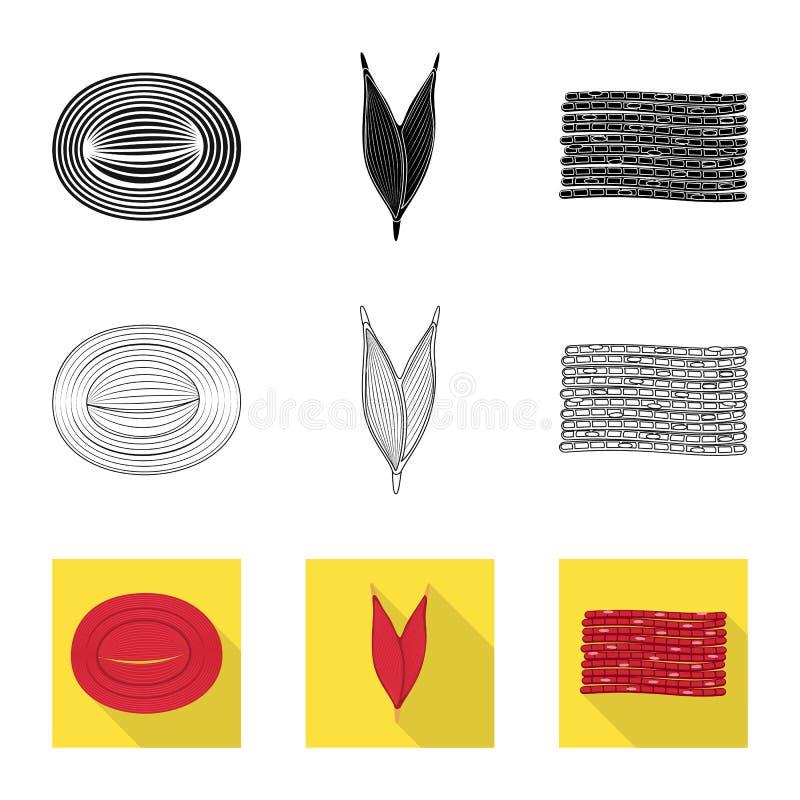 Oggetto isolato di fibra e del logo muscolare Raccolta del simbolo di riserva del corpo e della fibra per il web illustrazione di stock