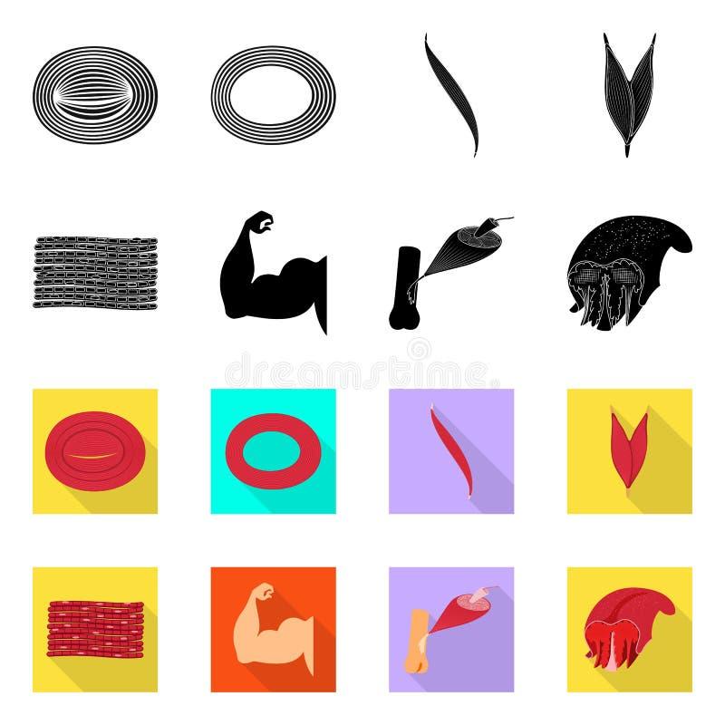 Oggetto isolato di fibra e del simbolo muscolare Raccolta dell'icona di vettore del corpo e della fibra per le azione royalty illustrazione gratis