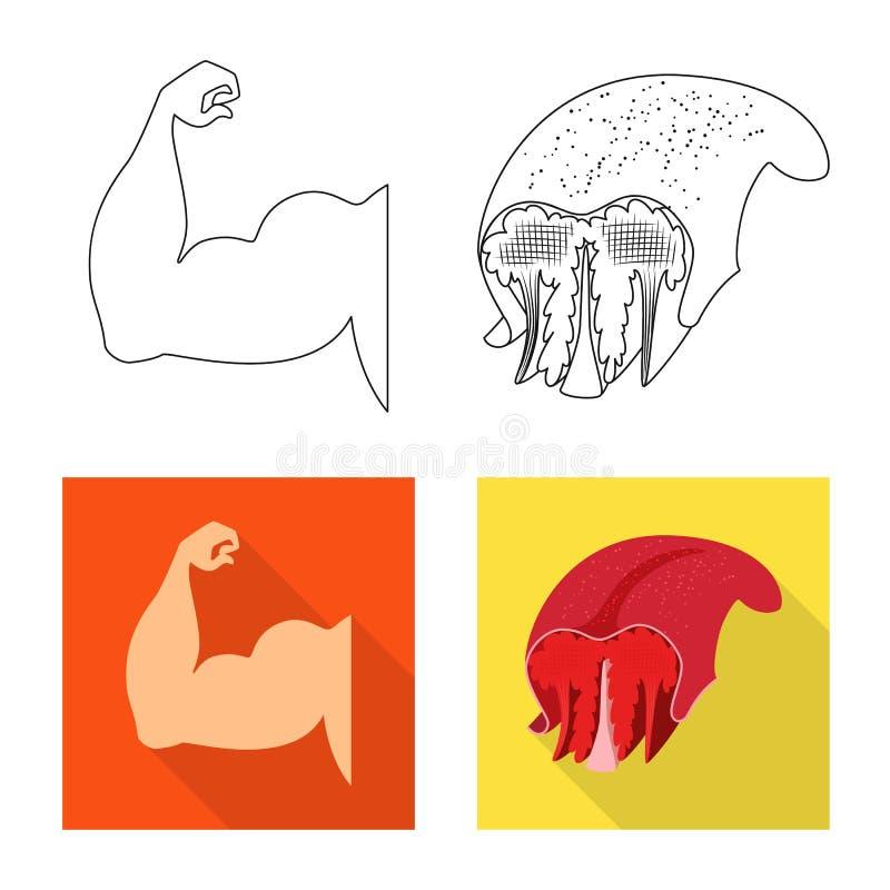 Oggetto isolato di fibra e dell'icona muscolare Metta del simbolo di riserva del corpo e della fibra per il web illustrazione di stock