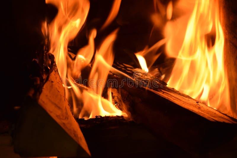 Ogień i drzewa zdjęcia royalty free