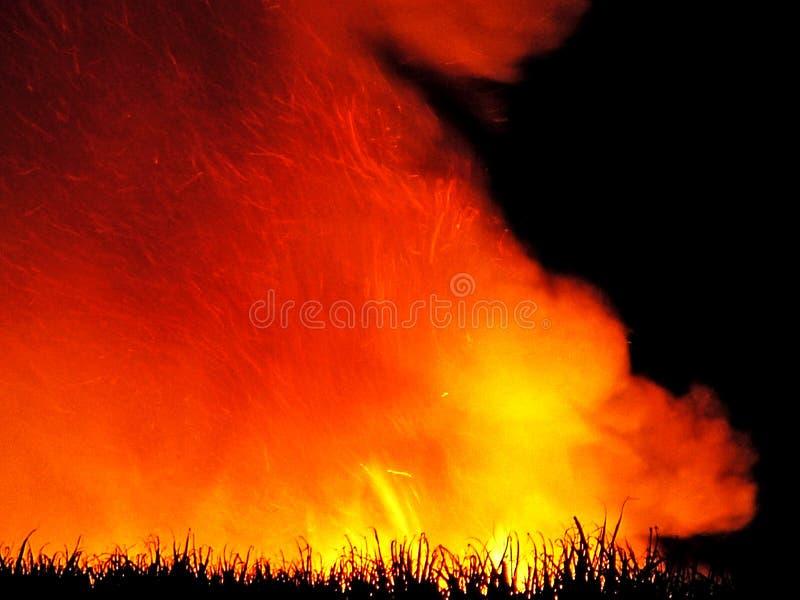 ogień trzcinowy zbiory pre cukru obraz royalty free