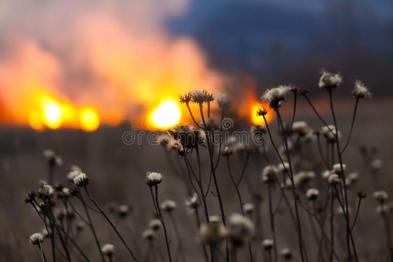 Ogień w polu obrazy royalty free