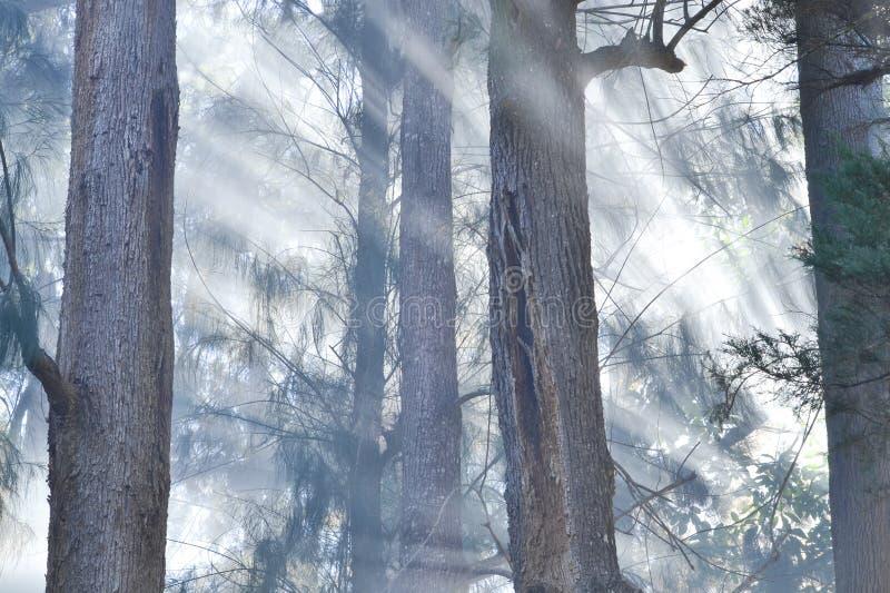 Ogień w sosnowym gaju obrazy stock