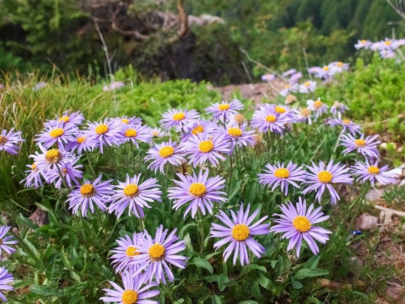 Oglądać kwiaty na Mountais Meran obrazy stock